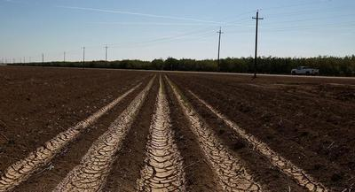 Many farmers had been bracing for the news as California's drought enters its fourth year. | GETTY