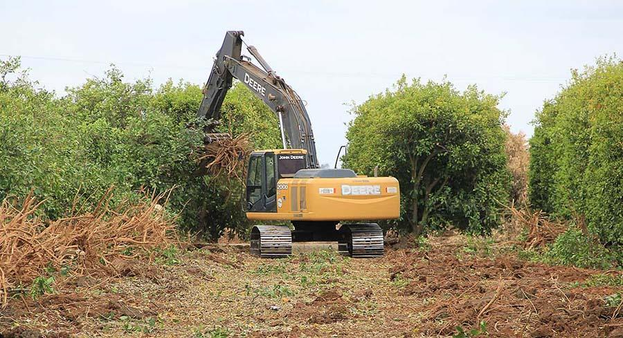Rather than allowing their orange trees to die, unwatered and unharvested in the hot sun, and become prey for pests and disease, the farmers are plowing them over. | COURTESY OF CALIFORNIA CITRUS MUTUAL